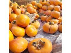 富光果业有限公司  专业种植各种水果 果树销售  莲花盖柿子