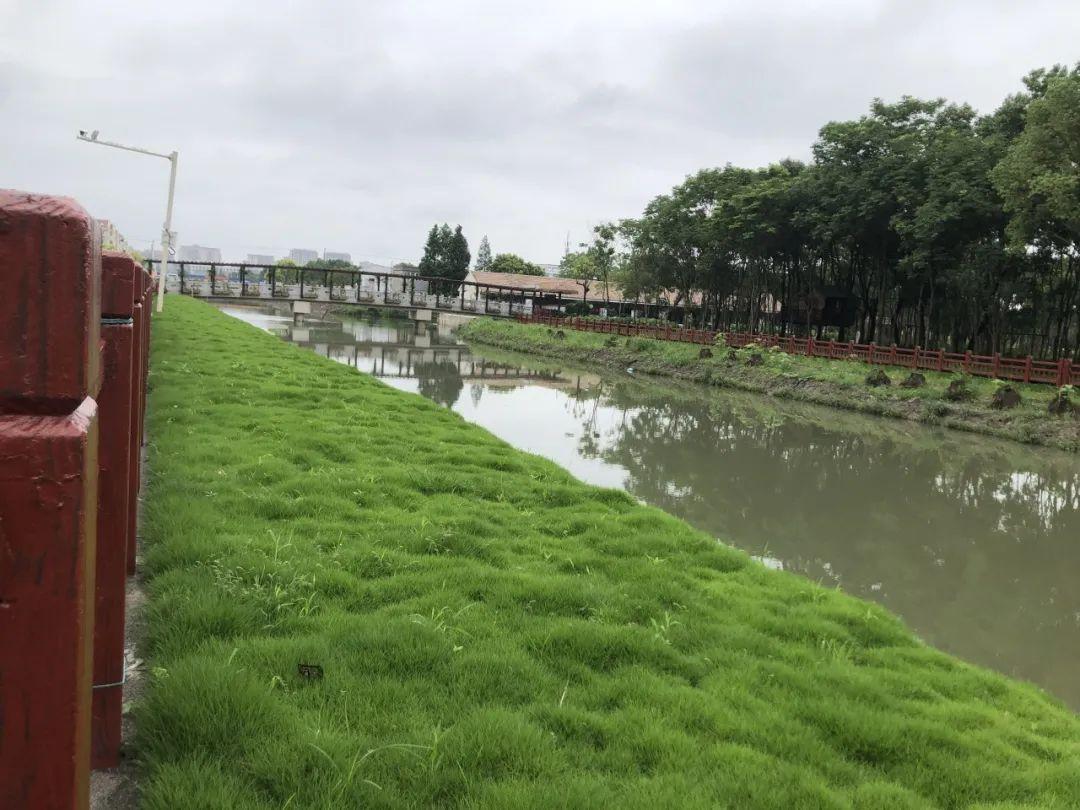 生态混凝土-绿化混凝土-植生混凝土-植被砼-生物基质混凝土