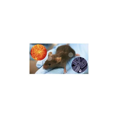 模型动物|膜片钳检测|膜片钳外包|膜片钳技术